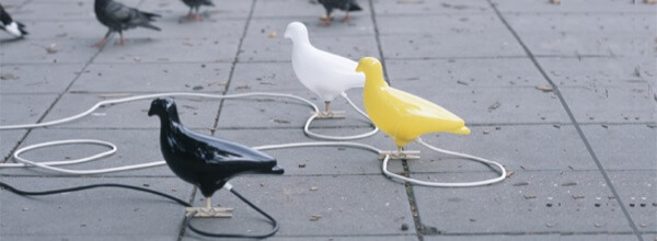 FTP vs Pigeon voyageur